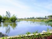 Tháng 9-2020, dự kiến nạo vét sông Cổ Cò